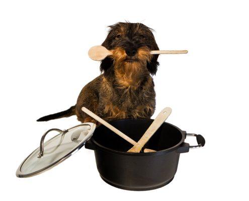 Dackel mit Kochlöffel und Topf