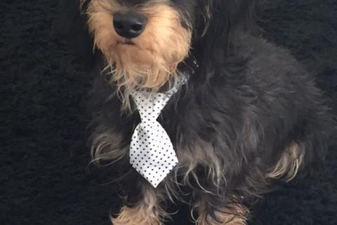 Krawattenpaule